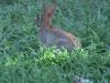 bunnyfeed1