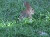 bunnyfeed2